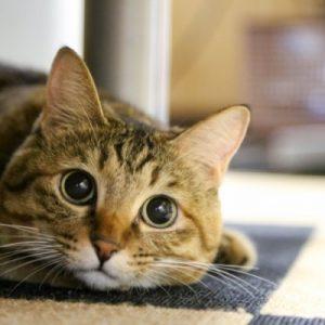 ウォーターサーバーの水はペットの猫や犬にも飲ませられる?